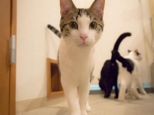 【京都】 猫カフェで室内の猫ちゃんを上手に撮る!【初心者OK!】の画像