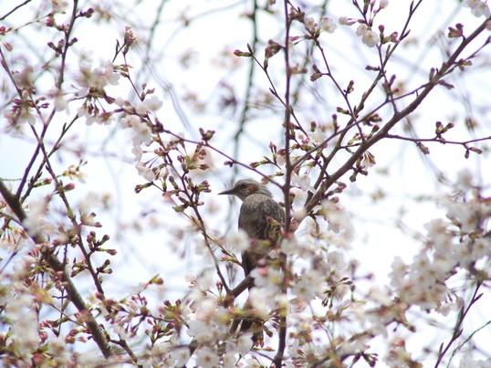 都会の林や水辺で鳥を見つけよう!早春のバードウォッチング入門の画像