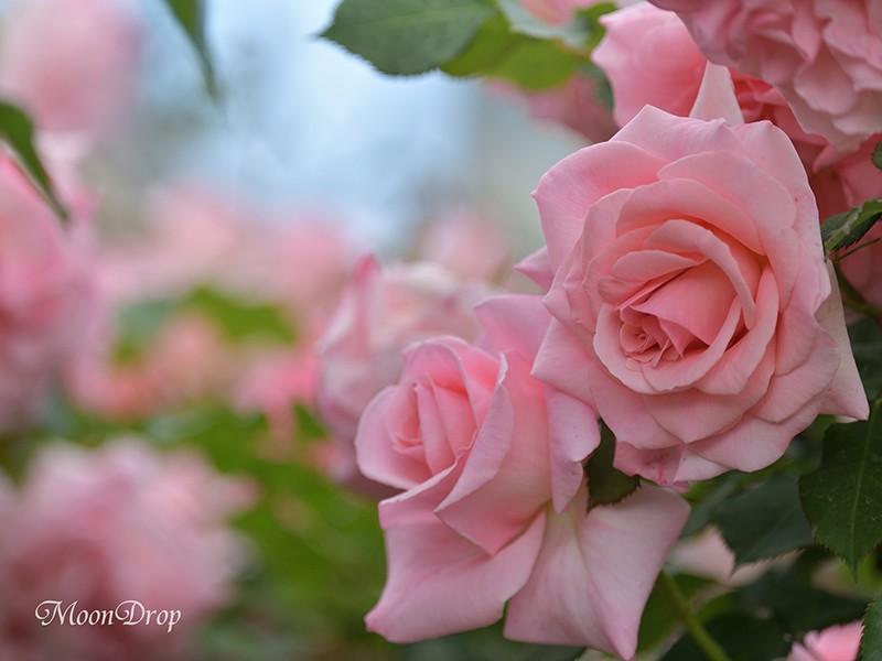 お写べりレッスン2☆思い通りの明るさ・ボケ・ブレが表現できる。の画像