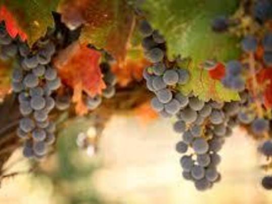 楽しいワイン入門第6回【アルザスとバーデン】の画像