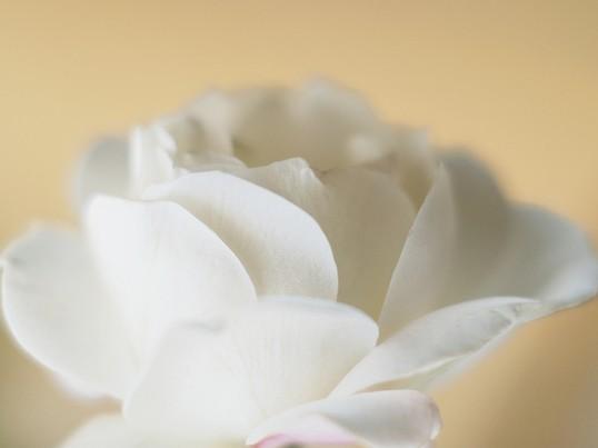 【Xmas限定】バラの花びらで作る☆ホワイトクリスマスリースの画像