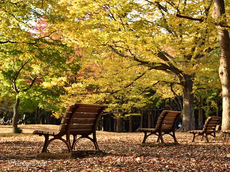 お写ん歩レッスン☆代々木公園の黄色の銀杏並木と紅葉を撮ろう! の画像