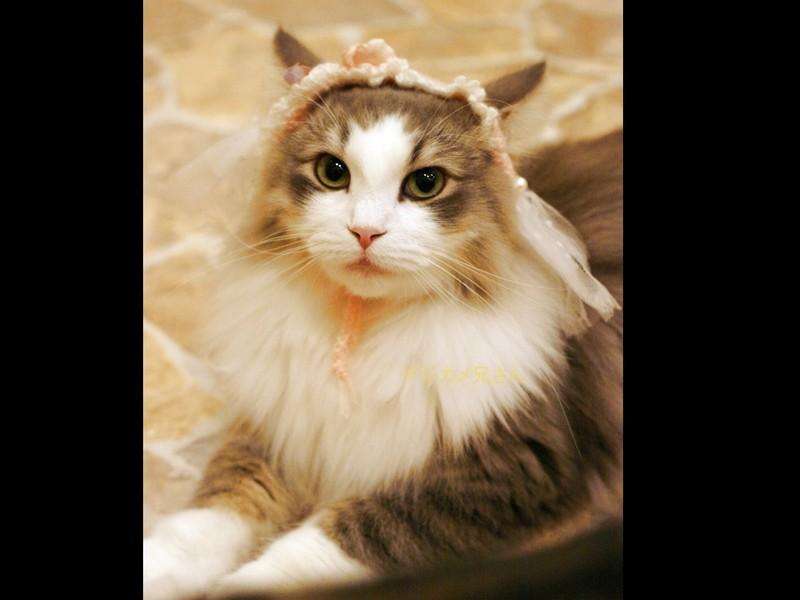 猫さんを撮りながら写真の絵作りstep2の画像