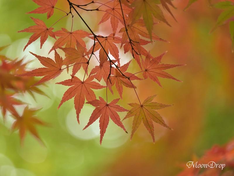 お写ん歩レッスン☆大田黒公園 回廊式日本庭園の美しい紅葉を撮ろう!の画像