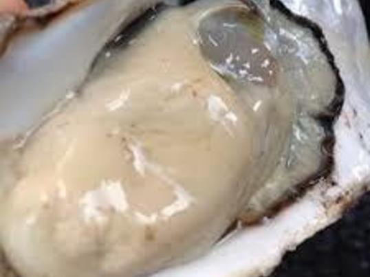 冬の味覚 !牡蠣づくし!牡蠣のキッシュロレーヌと牡蠣のオイル煮の画像