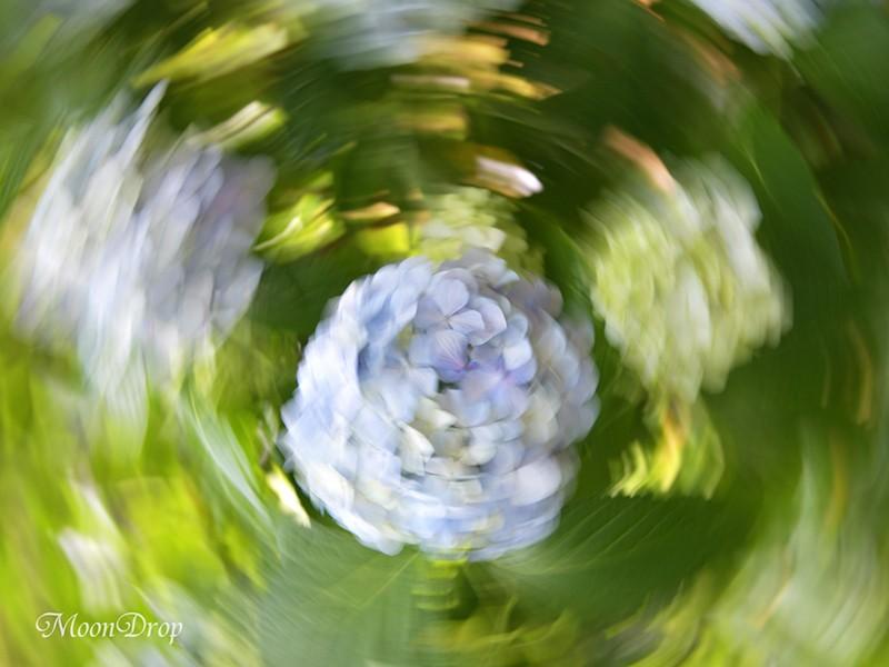 お写ん歩レッスン☆ボケとブレを活かしてお花と植物を撮ろう!の画像