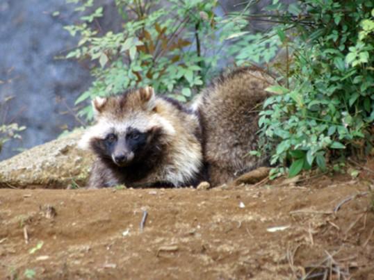 『町なか動物探検隊!』~町に暮らす野生動物たちを探して歩こう!の画像