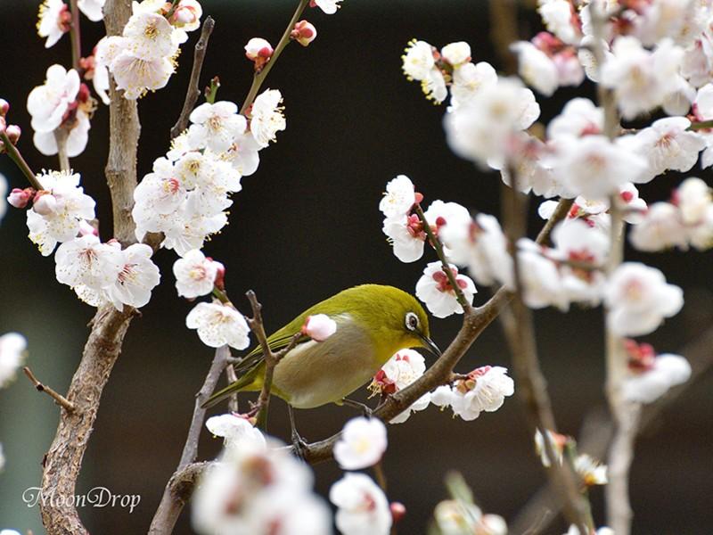 お写ん歩レッスン☆湯島天神で梅のある花風景を撮ろう!の画像