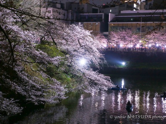 千鳥ヶ淵で夜桜撮影セミナーの画像