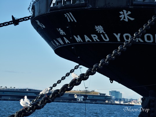 お写ん歩レッスン☆横浜スナップ(山下公園から大さん橋)を撮ろう!の画像