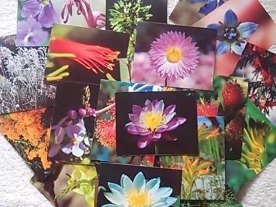 2時間で学ぶ花療法の全て~オーストラリアのエッセンスの画像