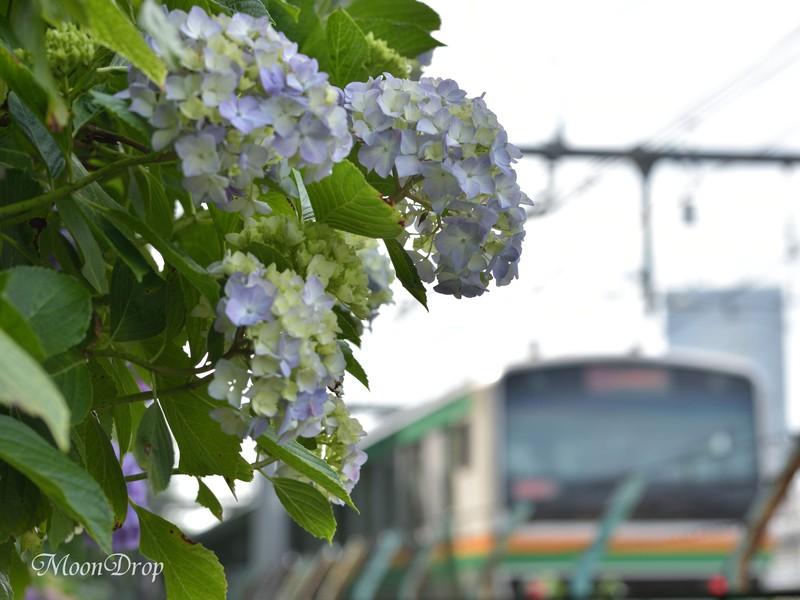 お写ん歩レッスン☆朝活☆飛鳥の小径で群生して咲く紫陽花を撮ろう! の画像