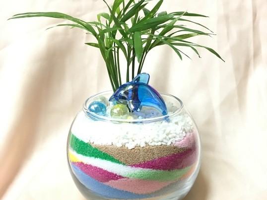【博多マルイ開催】カラーサンド&苔玉で、お部屋に観葉植物を♡の画像