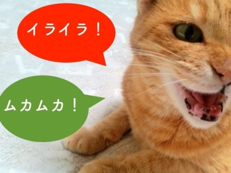 【オンライン】イライラ不安とさよなら!アンガーマネジメント入門講座の画像