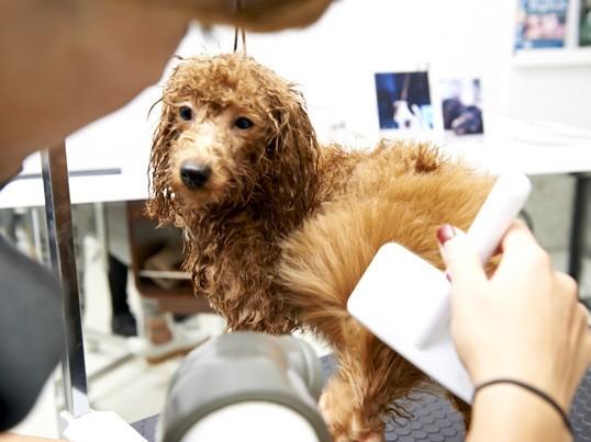 トリマーから学ぶ、愛犬のブラッシング!の画像