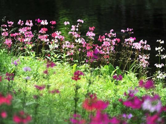 初心者も歓迎!花と風景写真の上手な撮り方教室@大田区下丸子徒歩1分の画像