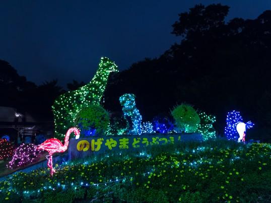 夜の動物園でマインドフル・フォトウォーク【8月開催】の画像