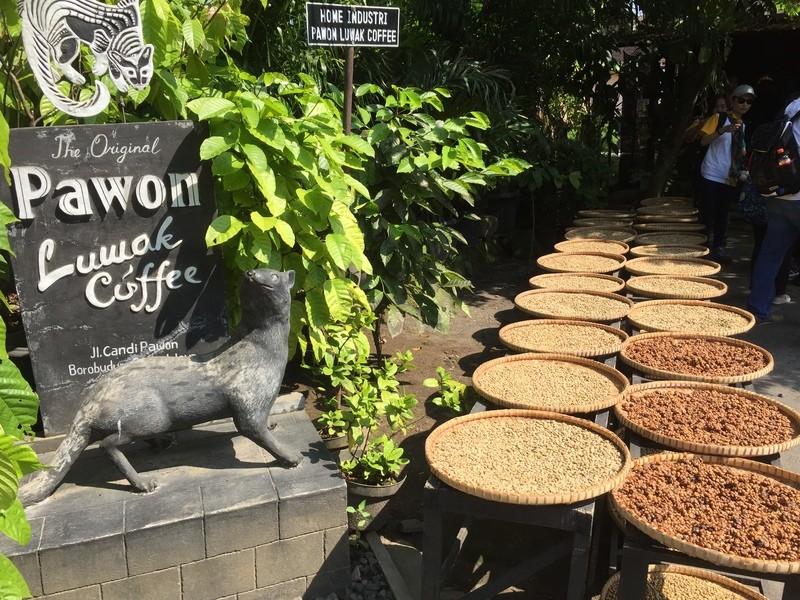 幻の超高級コーヒー「コピ・ルアク」を楽しむお茶会の画像