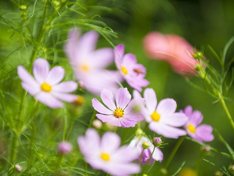 ④実践! 季節の草花撮影しよう。絞りの効果、基本をおさらい。の画像