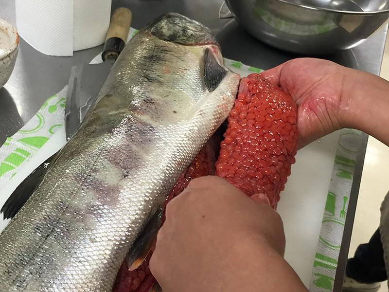 鮭をさばいて、いくら醤油漬け!!!の画像