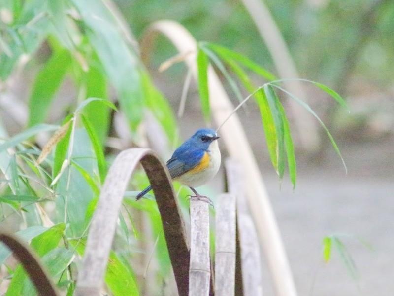 【双眼鏡貸出!】秋から冬の野鳥をもっと楽しもう!身近な冬鳥観察講座の画像