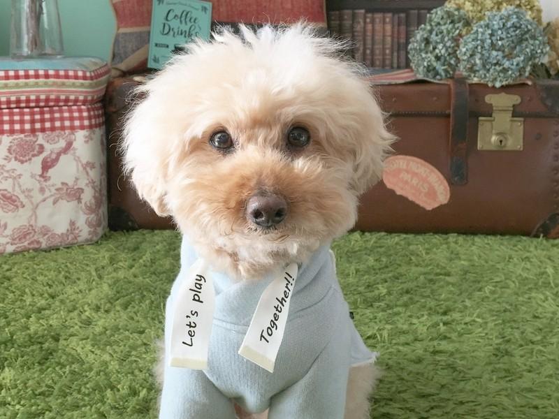 【スマホカメラ講座】プロカメラマンが教える愛犬を可愛く撮影するコツの画像