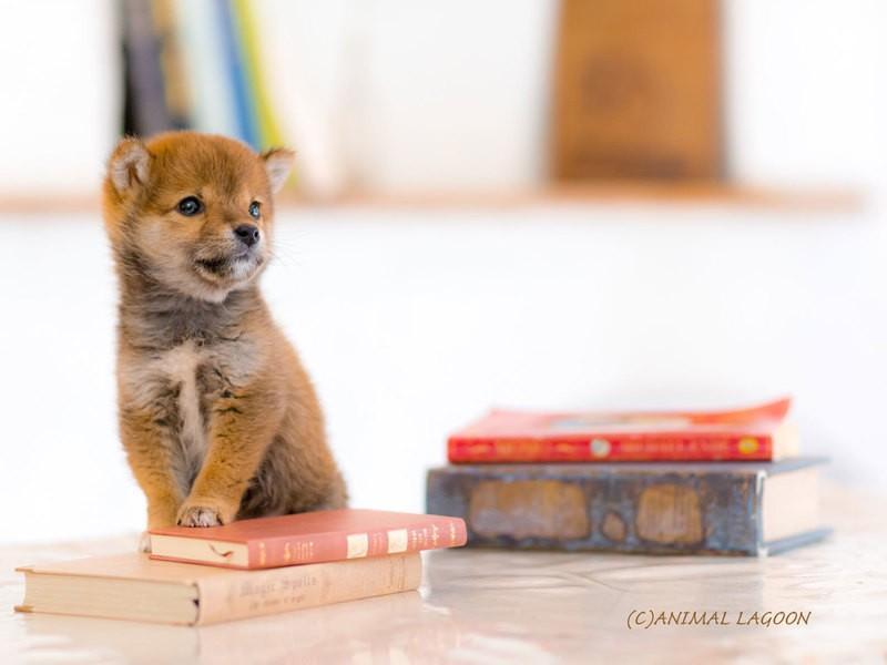 お洒落なハウススタジオでペット写真を撮ろう♪愛犬撮影実習編の画像