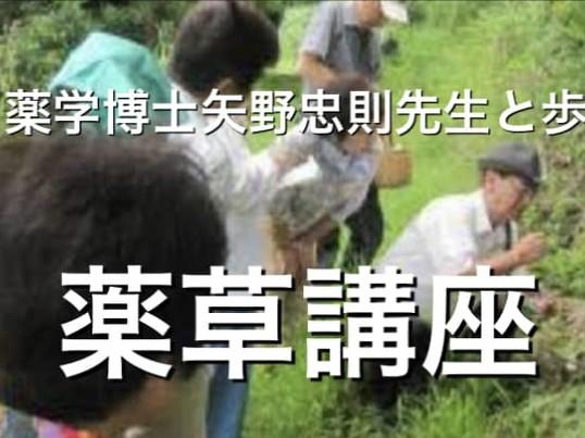 薬草散策講座in大牟田ハーブ畑(6/14)の画像