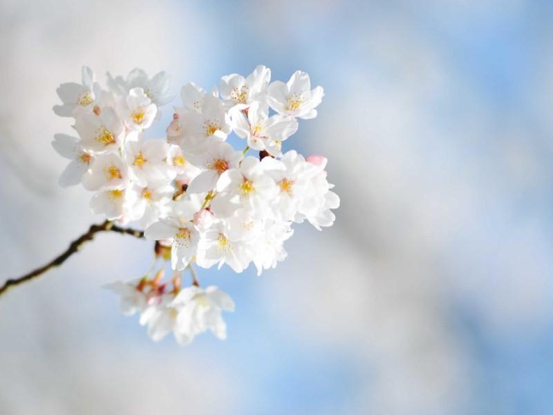 春を撮ろう!初級クラスの画像
