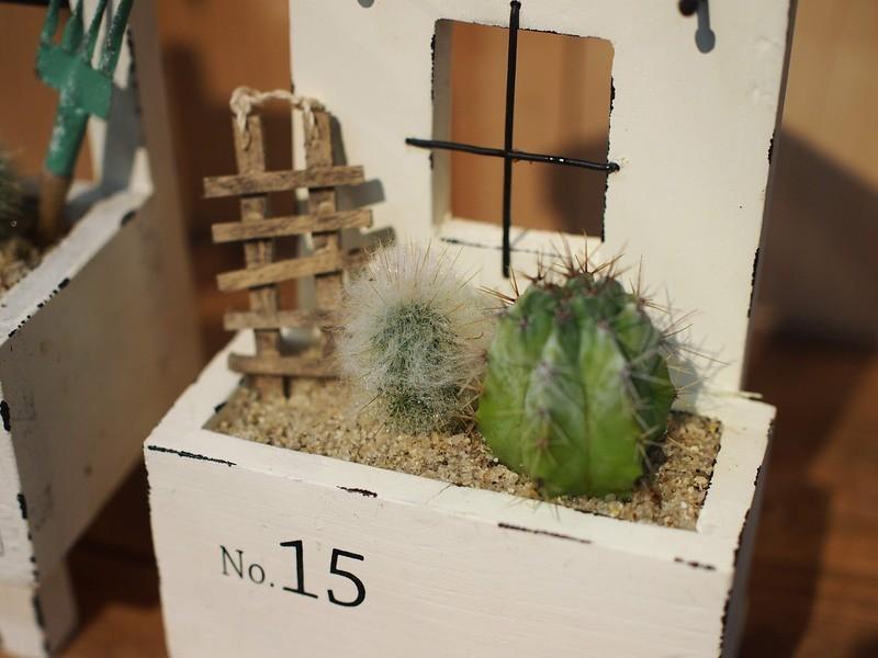 (tukuriba調布店開催)サボテンのミニチュアプランターの画像