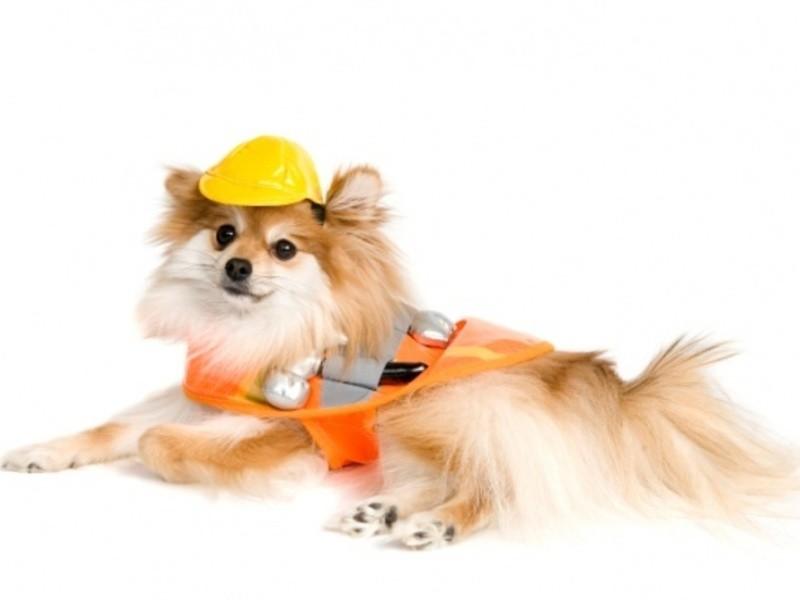 愛犬防災カスタマイズの画像