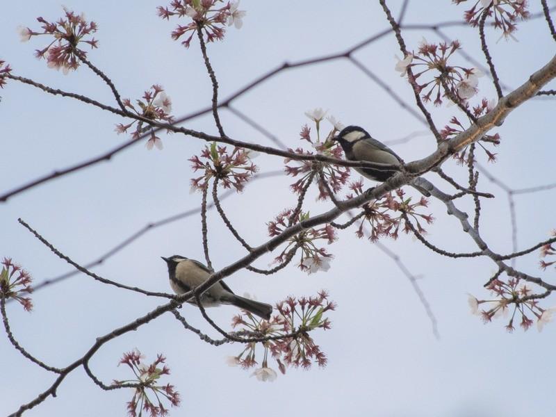 街ナカで夏鳥を見つけよう!夏の身近な野鳥観察入門の画像