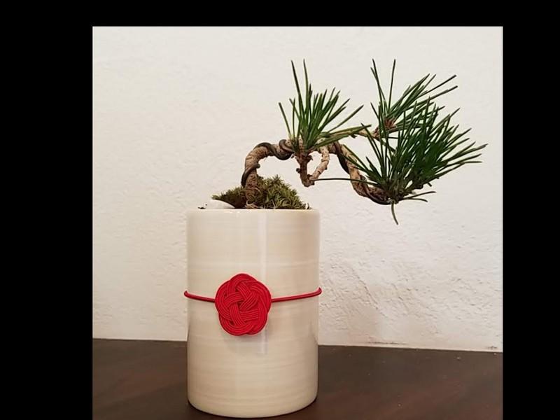 手ぶらdeミニ盆栽ワークショップの画像