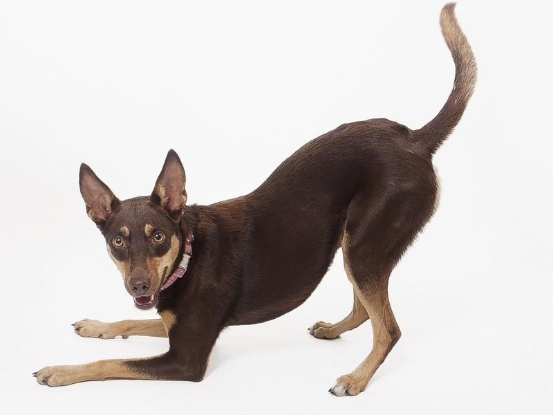 犬語<中級>セミナーの画像