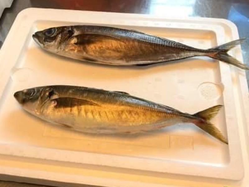 オクト君のやさしい魚の捌き方 三枚おろしを極めよう!の画像