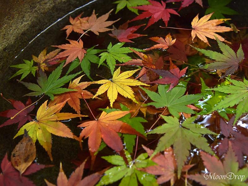 お写ん歩レッスン☆洋館と日本庭園の紅葉を撮ろう!旧古河庭園 の画像