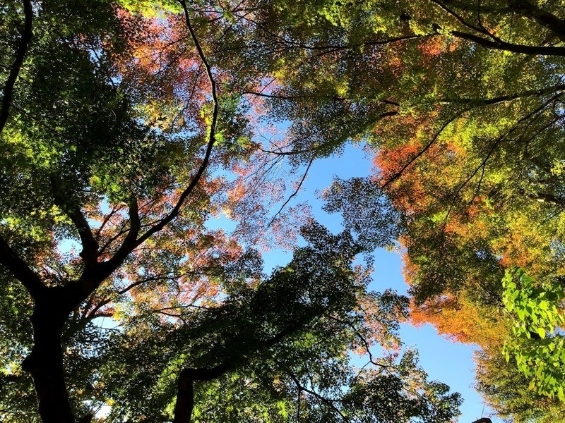 東京の田舎、青梅の和室で心打たれる名文を音読して英語練習!の画像
