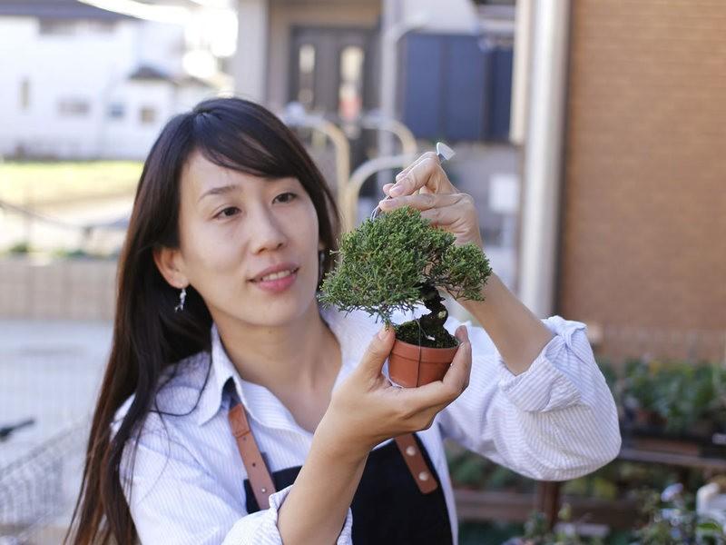 黒松苗を使った【手のひらサイズの盆栽講座】の画像