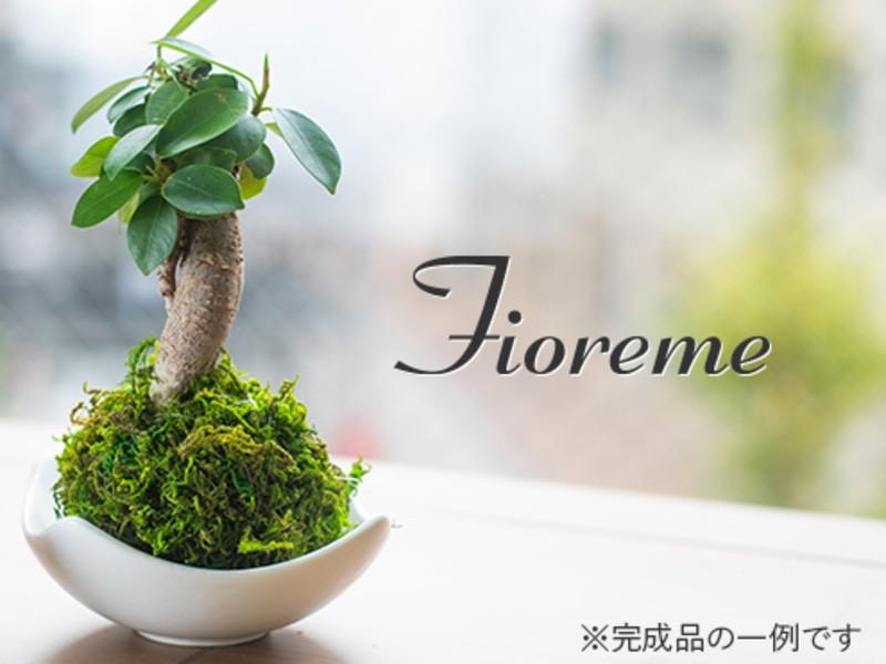 【手入れが簡単♪】ガジュマルなどの枝もの植物とまんまる苔玉作りの画像
