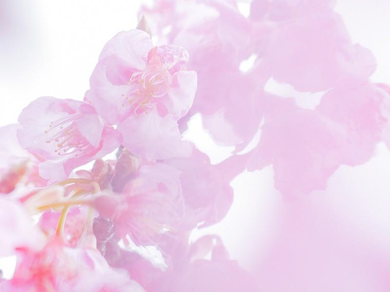 大阪【ワンコインレッスン】桜をフンワリ撮ろうの画像