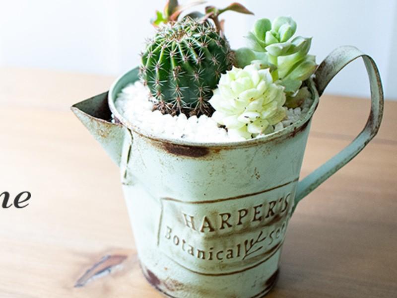 癒し効果抜群!!ミニサボテン×多肉植物の寄植え製作体験の画像