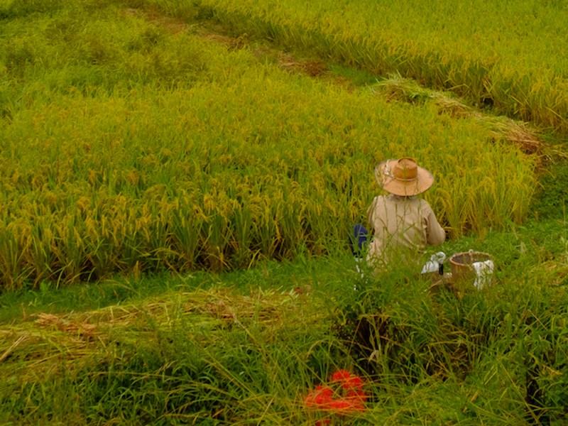 『田舎』の人吉球磨地方を、歩きながらの写真教室。の画像