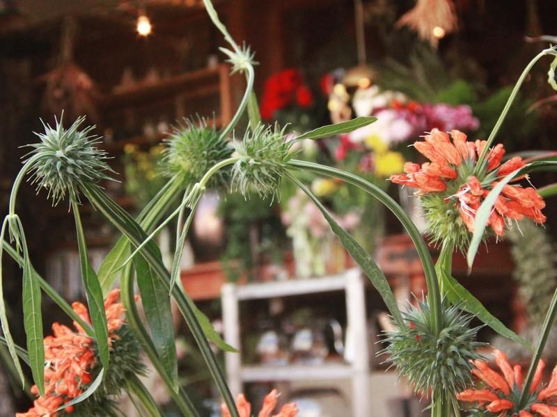 買ってきたお花の元気が無くなっても安心!切り花の水揚げ講座の画像