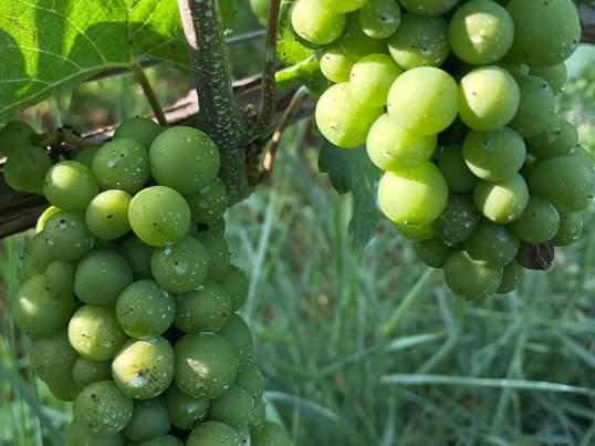 ワイン受験のための「葡萄の会」の画像