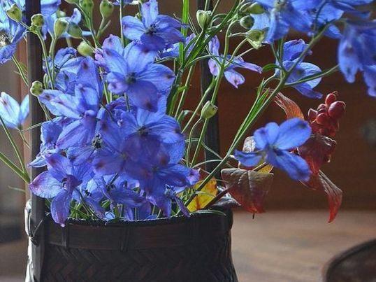 初心者大歓迎☆季節の花木を活けて、楽しみ、愛でる。の画像