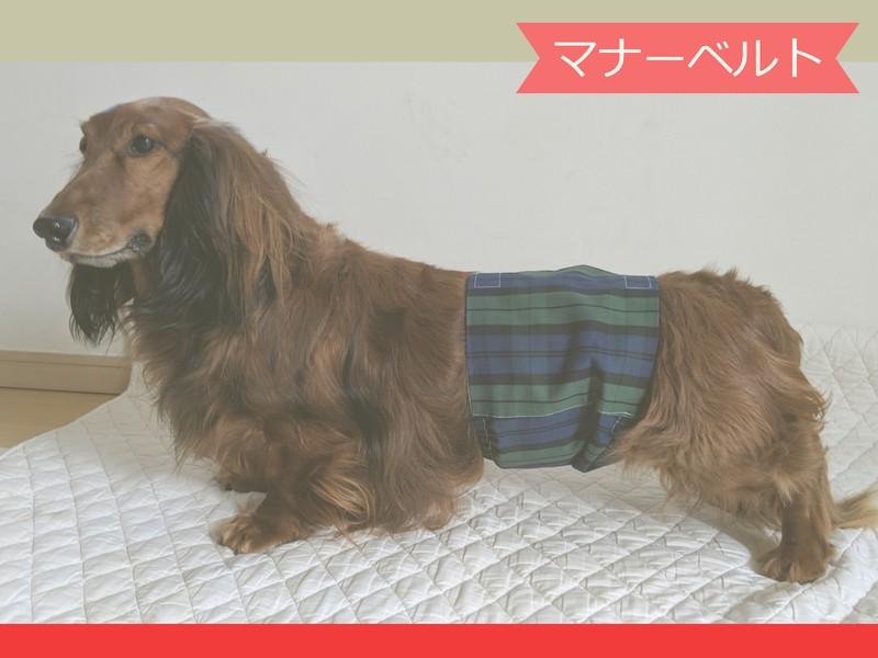愛犬のマナーパンツ/マナ―ベルト作り ★動物愛護支援対象レッスンの画像