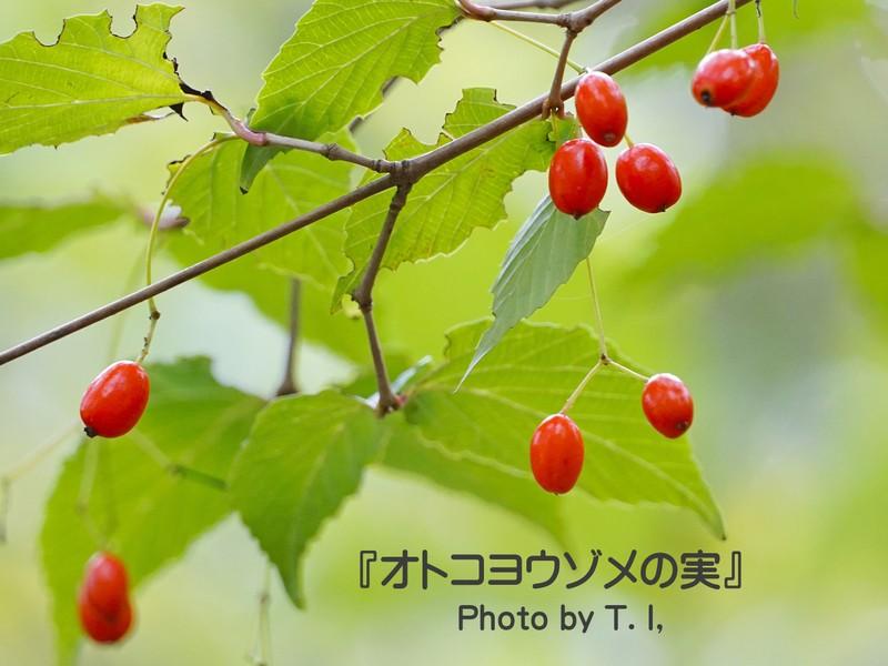 秋盛りの草花を撮る【季節を味わう写真散歩・都心編】《ミニ講評付》の画像