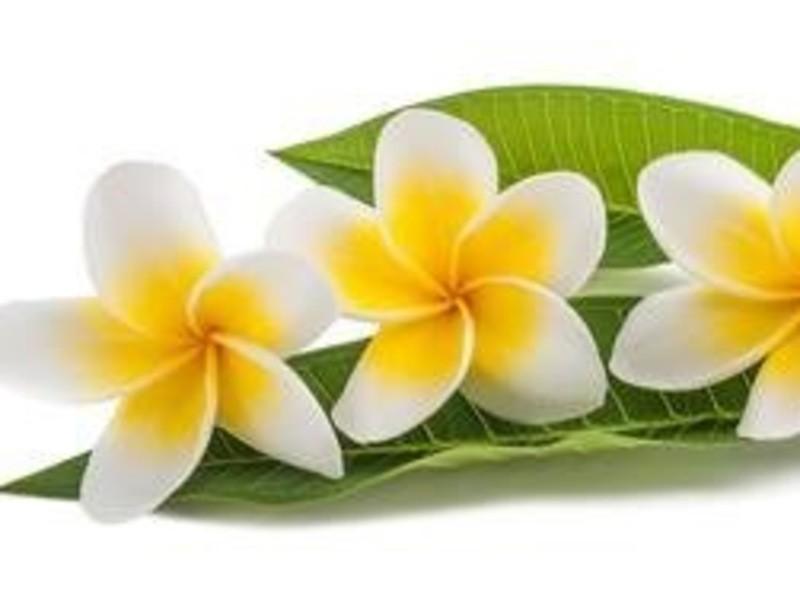 夏休み♪♪ お子様連れOK!ハワイアンアロマ調香講座の画像