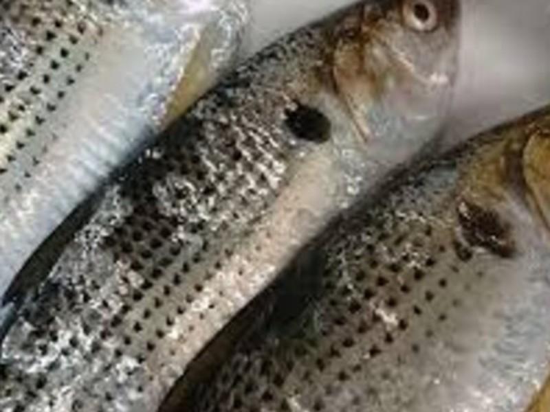 【魚と発酵料理教室】一人でさばいて魚料理♬こはだ編 の画像