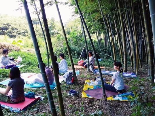 竹林ヨガの画像